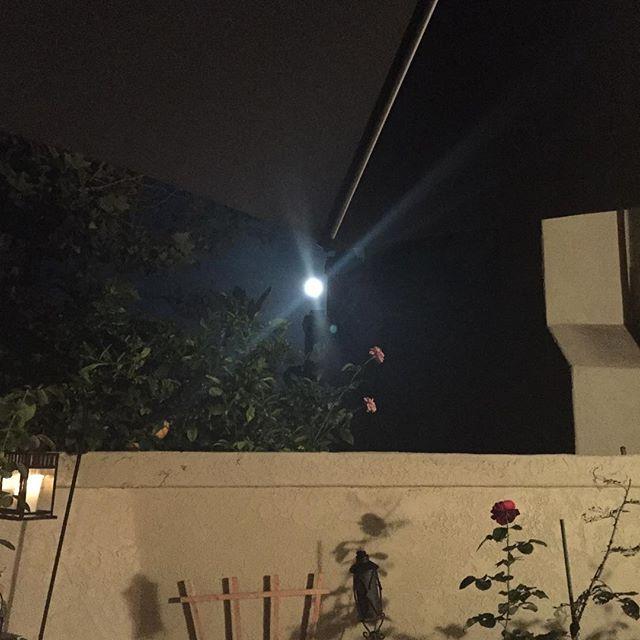 Full moon!! cha cha cha